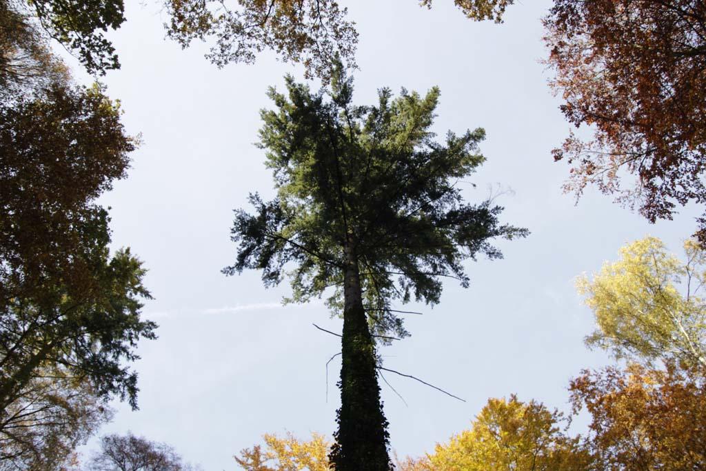 Herbst1_Hollerhof