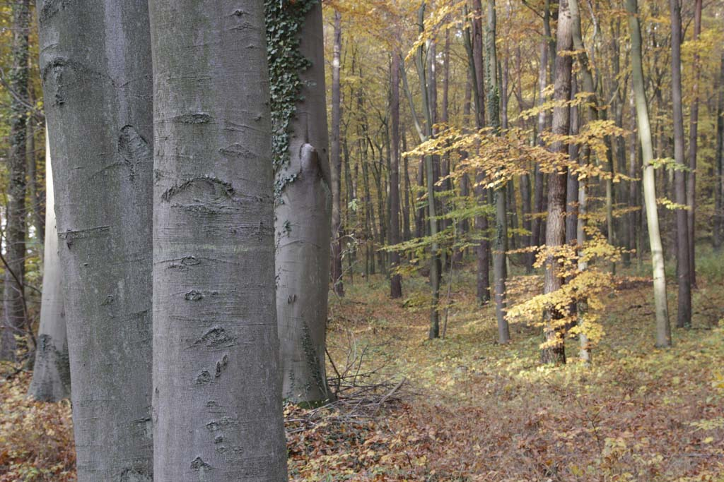 Herbst2_Hollerhof