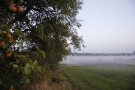 Herbst4_Hollerhof