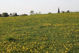 Landschaft33